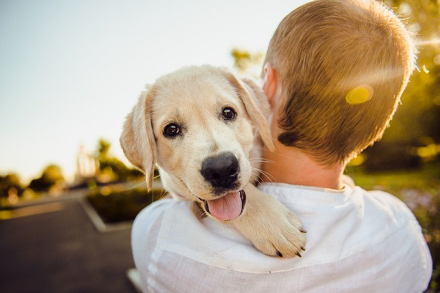 Faire le choix d'une tondeuse pour chien