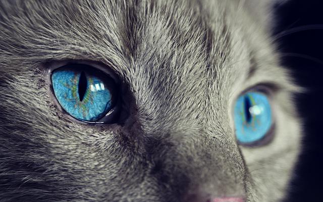 5 mots pour décrire un chat
